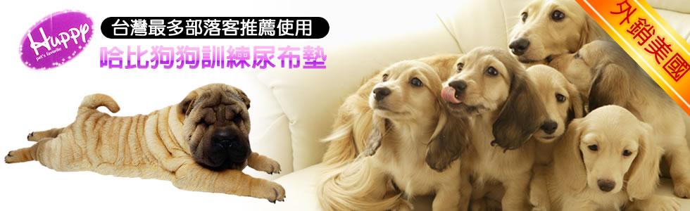 狗狗為什麼到處亂尿尿? 如何訓練狗大小便?